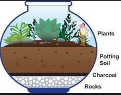 Terrarium for kids. Drawing showing the layers of rocks, charcoal, and soil in the terrarium, along with plants, and a small garden gnome. Mini Terrarium, How To Make Terrariums, Terrarium Plants, Succulent Terrarium Diy, Terrarium Wedding, Indoor Succulent Garden, Mini Cactus Garden, Succulent Soil, Glass Terrarium