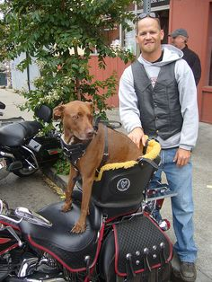 """Can Dogs Ride On Motorcycle 