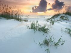 St Joseph state park, at the tip of the Cape in Gulf County, FL