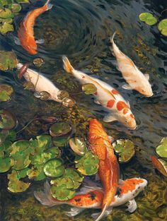 Koi painting by Terri Kelly Moyers Coy Fish, Koi Fish Pond, Fish Ponds, Koi Art, Fish Art, Carl Spitzweg, Koi Painting, Fish Varieties, Fish Wallpaper