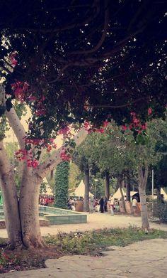 Cyprus : Nicosia