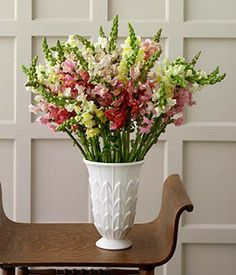 Image detail for -Snapdragon Bouquet - 15 stems and other gifts at MarthasFlowers ...