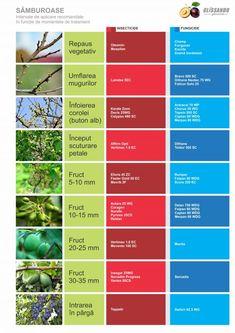 Garden Pool, San Jose, Backyard Landscaping, Calendar, Exterior, Landscape, Pools, Agriculture, Plant