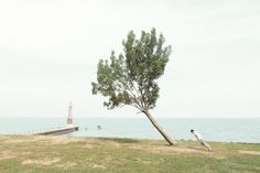 Chicago photographer Paul Octavious has just released a number of new photos as part of his Lean With It series, where he captures people bending (I suspect falling) in parallel with precariously angled trees
