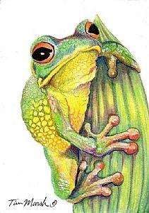 Tree Frog by Tim Marsh Colored Pencil ~ x Colored Pencil Storage, Colored Pencils, Coloured Pencil Drawings, Animal Paintings, Animal Drawings, Art Drawings, Fish Drawings, Frog Drawing, Frog Art