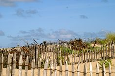Vendée Vineyard, Outdoor, Landscapes, Travel, Outdoors, Vine Yard, Vineyard Vines, Outdoor Games, The Great Outdoors