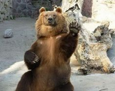 Welcome to the zoo. I'm bear, and I'm your guide.