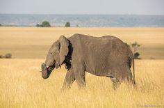 giants-of-africa-18