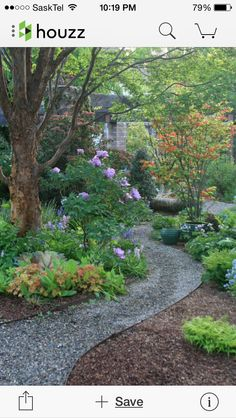 Garden flowers and path