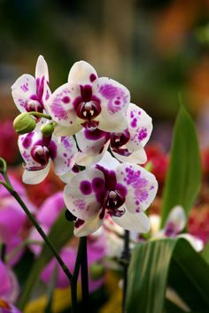 Water is critical to a moth orchid Planting Flowers, Beautiful Blooms, Amazing Flowers, Beautiful Flowers, Beautiful Orchids, Wonderful Flowers, Orchids, Love Flowers, Orchidaceae