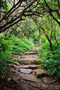 Nature Photography, Spiritual Wall Decor, Walking The Path, Asheville, NC Fine Art Photo Print Blue Ridge Parkway, Mountains, Hiking Trails
