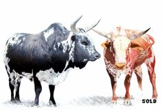2 bulls