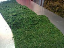 Hey, I found this really awesome Etsy listing at https://www.etsy.com/listing/125017268/moss-table-runner-14-inches-x-48-inches