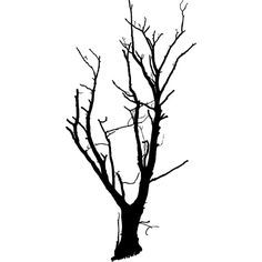 Dead Tree Optimized ❤ liked on Polyvore featuring filler