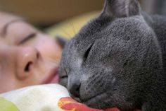 There are reasons why you should—and shouldn't—snuggle up with your feline.