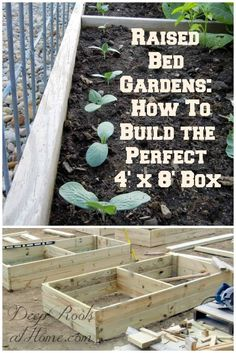 Raised Bed Gardens: How To Build the Perfect 4\' x 8\' Box. The specifications to help you get started! #gardening #gardens #gardener #outdoor #summer #homesteading #soil #spring #outdoorliving #building #seeds #vegetables #homestead #flowers #planters #planting #plants #plantbased #projects #raisedgardenbeds #newhome #flowergarden #backyard #raisedvegetablegarden #seeds #vegetablesgardening #veggies #flowergardening #veggiegarden via Jacqueline at Deep Roots at Home