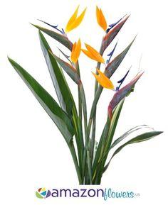 Whole Bird Of Paradise Tropical Flowers Bulk