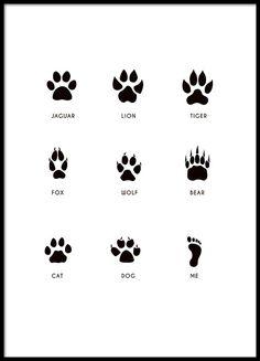 Svartvit poster med tassavtryck från djur.