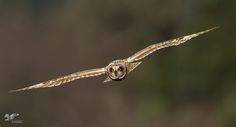 """https://flic.kr/p/QydV4N 