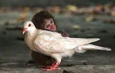 Histórias Sobre Meu Filho: Sobre macacos e pássaros