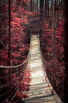 Nature Photography landscape art surreal red