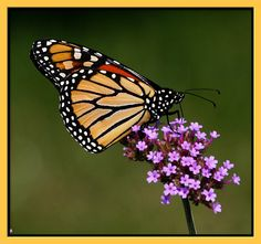 Monarch Butterfly and purple flower  http://stores.ebay.com/crazy-weekly-discounts