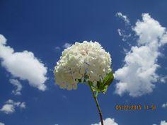 Hortensia confundiéndose en lo infinito con las nubes...