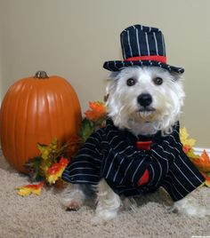 preston suit - Wayfair Halloween Dog Costumes | PrestonSpeaks.com