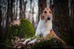 Beautiful dog! GREAT Shot! dogwarts: by Tomas Danco