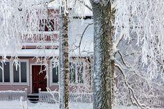 House between the trees, Riihimäki, Finland