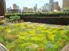 Green roofs insulate like a blanket, saving energy; they provide natural habitats for birds, butterflies, honeybees, lady bugs, and migrating birds. On this roof, soil depth ranges from four to eight inches.