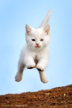 white kitten cat and blue sky - jumping kitten