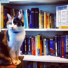 Cat at the Sprial Bookcase in #Manayunk #Philadelphia #cats #catlovers #books #bookstore #MNYKTakeover by @Brooksie Visions Visions