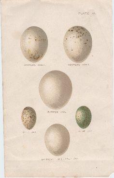 Beautiful Bird's Eggs - The Graphics Fairy