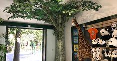 Ladenbau | Wien | A-West e.U. Ladeneinrichtungen Front Desk, Custom Cars, Projects