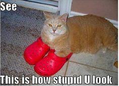 stupid crocs!