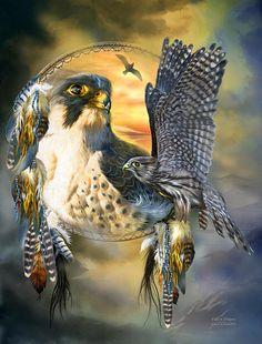Falcon Dreams - Carol Cavalaris
