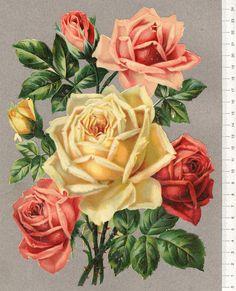 "Photo from album ""Ретро цветочки"" on Yandex. Botanical Flowers, All Flowers, Flowers Nature, Botanical Prints, Rose Images, Rose Pictures, Flower Images, Victorian Flowers, Vintage Flowers"