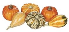 Pumpkins and Gourds for autumn.