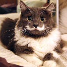 Seznamte se s nejslavnějšími kočkami internetu! Jsou prostě k sežrání - Evropa 2