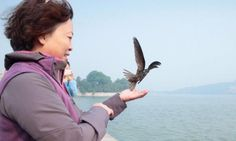 Swifts migrate from Beijing to southern Africa without landing » Focusing on Wildlife