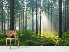 36 Ideas wall murals forest photo wallpaper for 2019 Northern Lights Wallpaper, Lit Wallpaper, Forest Wallpaper, Photo Wallpaper, Palette Wall, Wall Bench, Forest Light, Home Lighting Design, Forest Decor