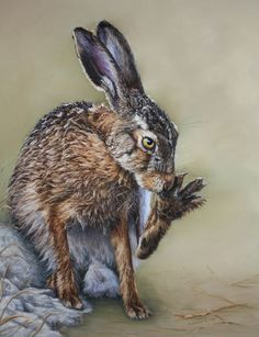 GROOMING HARE BY CATHERINE INGLIS