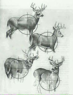 Deer hunting diagram for the well place shot. Whitetail Deer Hunting, Deer Hunting Tips, Deer Hunting Blinds, Hunting Girls, Archery Hunting, Hunting Gear, Crossbow Hunting, Hunting Stuff, Texas Hunting