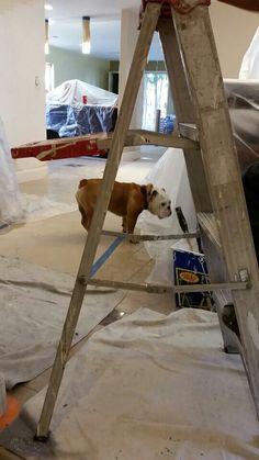 Popeye, the foreman