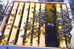 Beekeeping 101: Hiving the bees and homemade sugar syrup