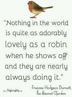 All Birds, Little Birds, Love Birds, Beautiful Birds, Johnny Jump Up, European Robin, Robin Redbreast, Spring Song, British Garden