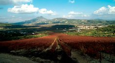 Palivos Estate in Ancient Nemea. Wines, Vineyard, Greece, Food Travel, Outdoor, Image, Beautiful, Roads, Gypsy