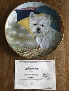 """22ct Gold Trimmed West Highland White Terrier Collectors Plate """"Undercover""""  