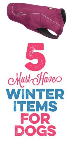 5 Must Have Winter Items For Dogs
